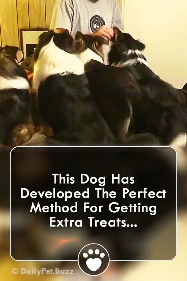 This Dog Has Developed The Perfect Method For Getting Extra Treats...