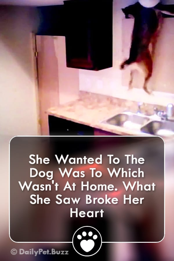 She Wanted To The Dog Was To Which Wasn\'t At Home. What She Saw Broke Her Heart