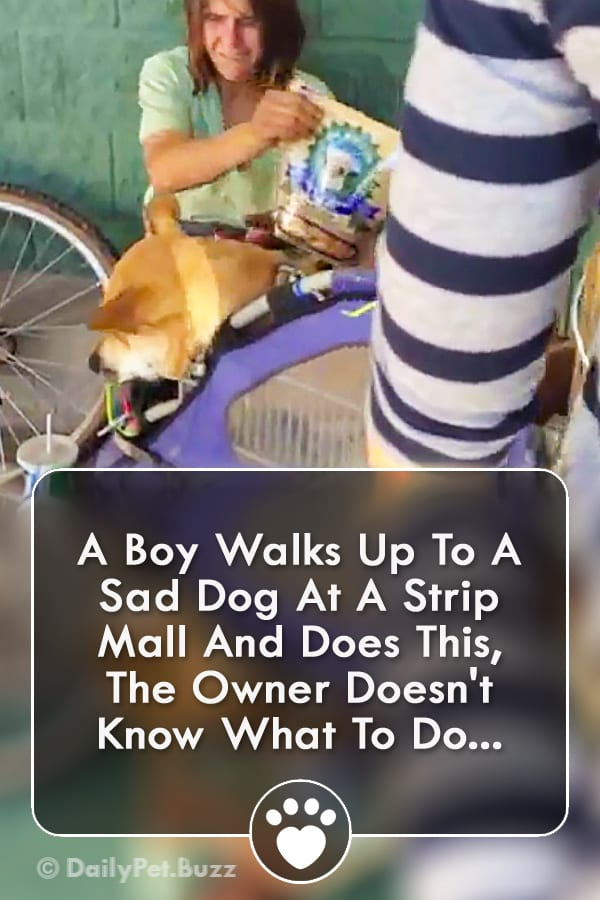A Boy Walks Up To A Sad Dog At A Strip Mall And Does This, The Owner Doesn\'t Know What To Do...