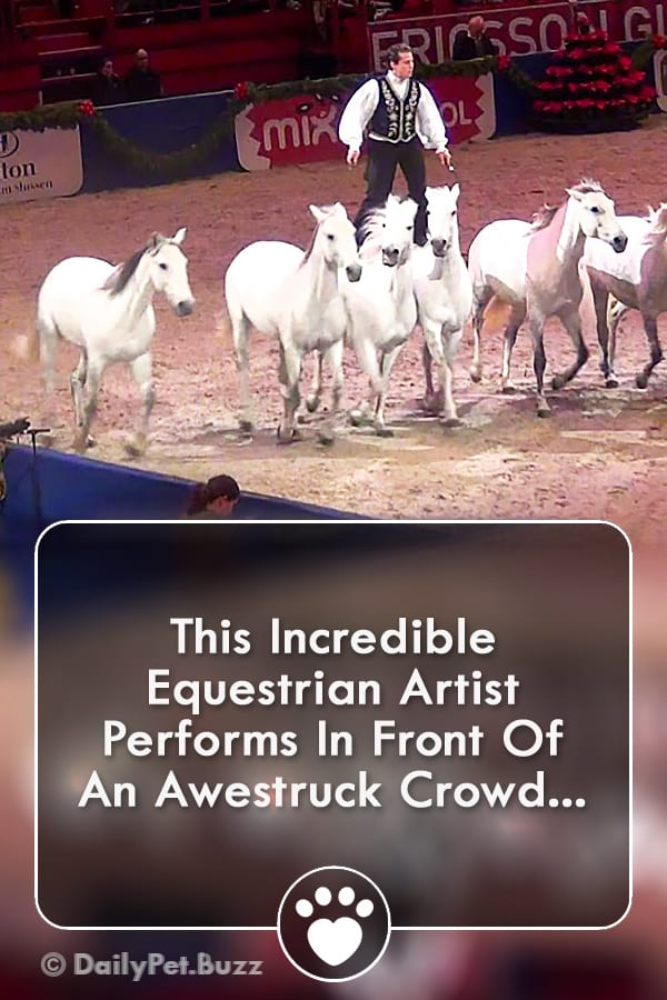 This Incredible Equestrian Artist Performs In Front Of An Awestruck Crowd...