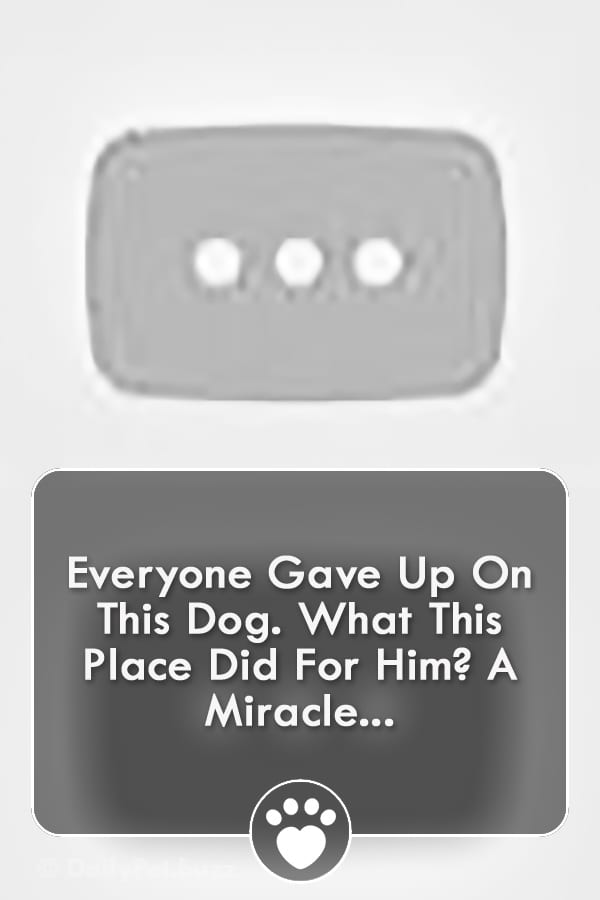 Everyone Gave Up On This Dog. What This Place Did For Him? A Miracle...