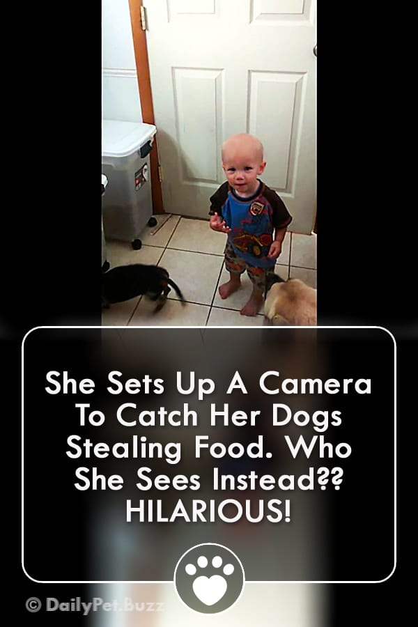 She Sets Up A Camera To Catch Her Dogs Stealing Food. Who She Sees Instead?? HILARIOUS!