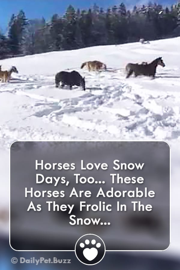 Horses Love Snow Days, Too... These Horses Are Adorable As They Frolic In The Snow...