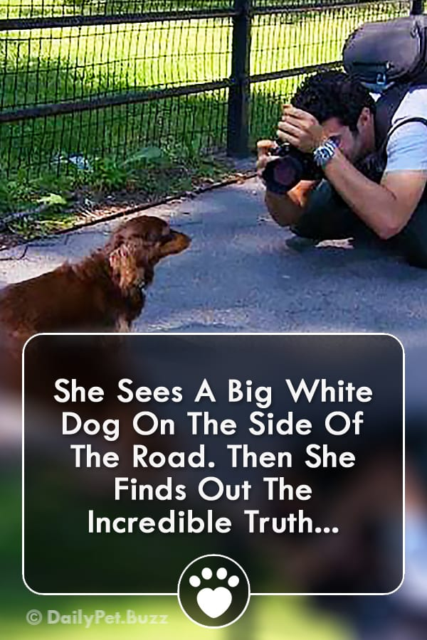 She Sees A Big White Dog On The Side Of The Road. Then She Finds Out The Incredible Truth...
