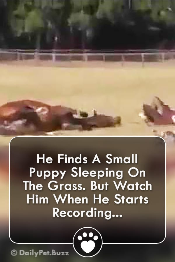 He Finds A Small Puppy Sleeping On The Grass. But Watch Him When He Starts Recording...
