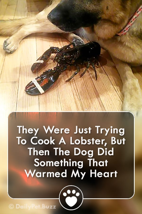 They Were Just Trying To Cook A Lobster, But Then The Dog Did Something That Warmed My Heart