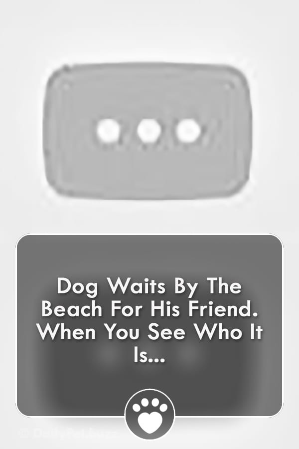 Dog Waits By The Beach For His Friend. When You See Who It Is...