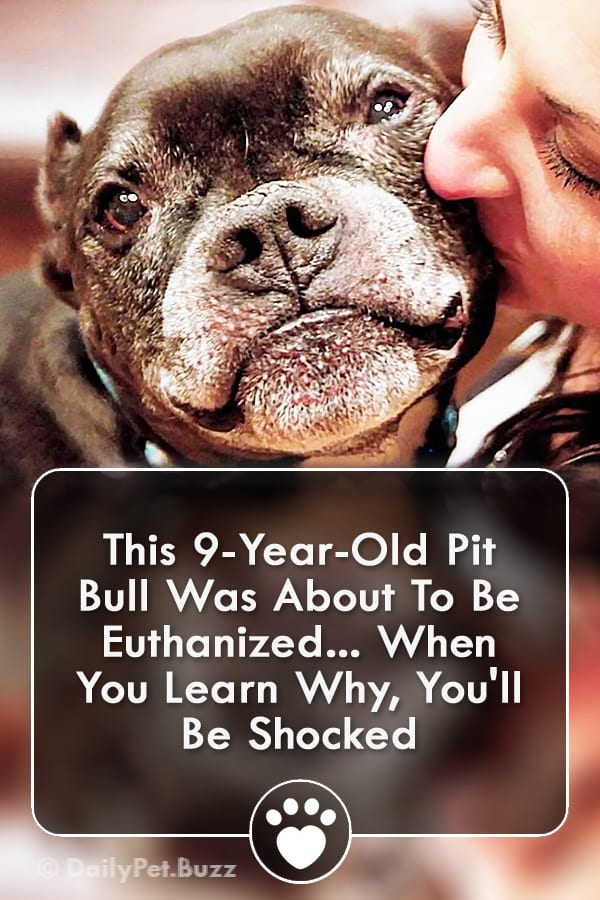 This 9-Year-Old Pit Bull Was About To Be Euthanized... When You Learn Why, You\'ll Be Shocked