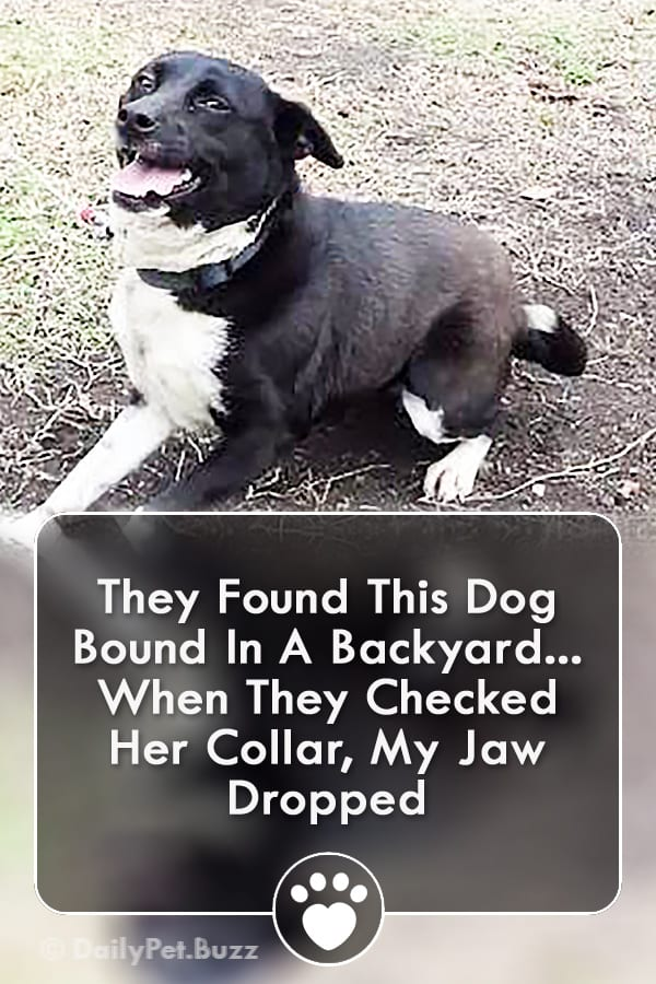 They Found This Dog Bound In A Backyard... When They Checked Her Collar, My Jaw Dropped