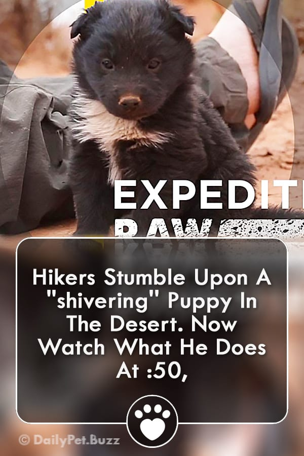 Hikers Stumble Upon A \'\'shivering\'\' Puppy In The Desert. Now Watch What He Does At :50,