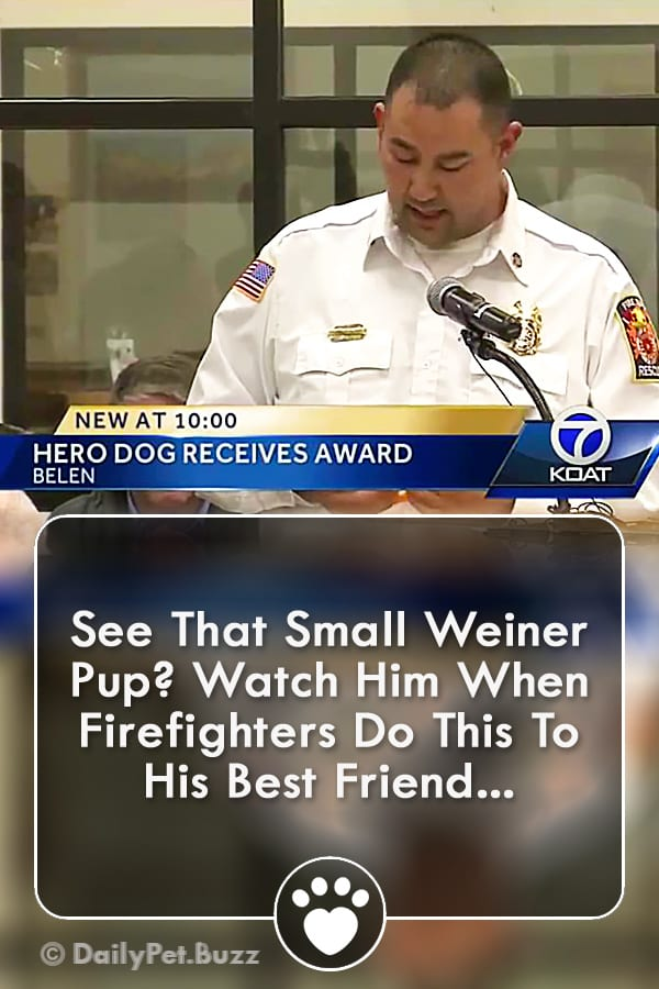 See That Small Weiner Pup? Watch Him When Firefighters Do This To His Best Friend...