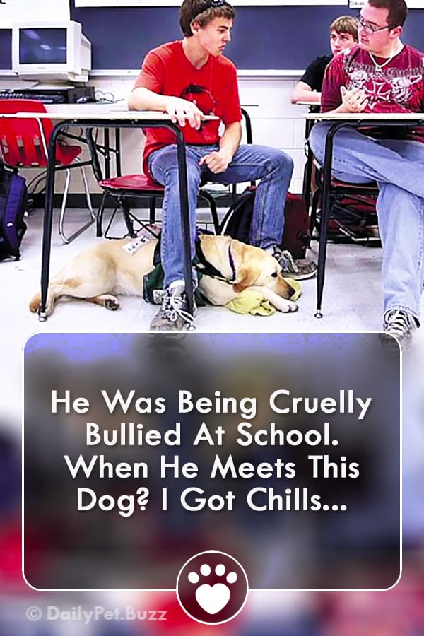 He Was Being Cruelly Bullied At School. When He Meets This Dog? I Got Chills...
