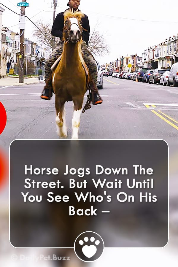 Horse Jogs Down The Street. But Wait Until You See Who\'s On His Back –