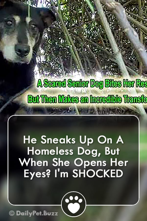 He Sneaks Up On A Homeless Dog, But When She Opens Her Eyes? I\'m SHOCKED