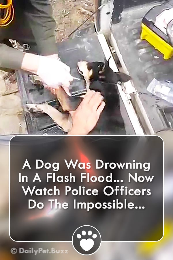 A Dog Was Drowning In A Flash Flood... Now Watch Police Officers Do The Impossible...