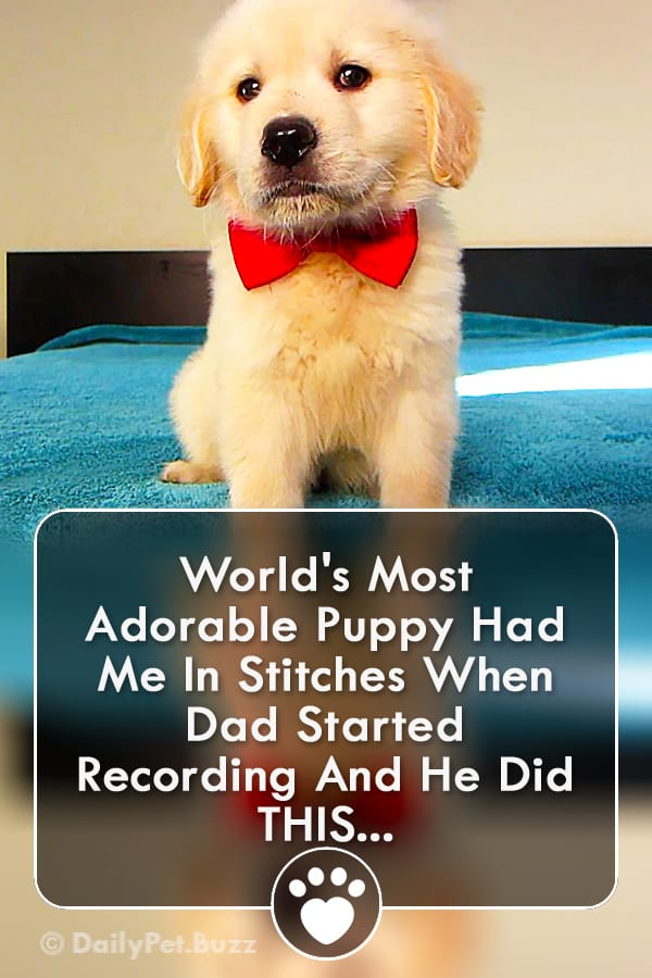 World\'s Most Adorable Puppy Had Me In Stitches When Dad Started Recording And He Did THIS...