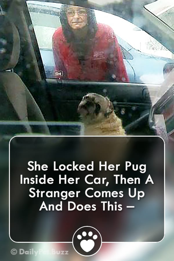 She Locked Her Pug Inside Her Car, Then A Stranger Comes Up And Does This –