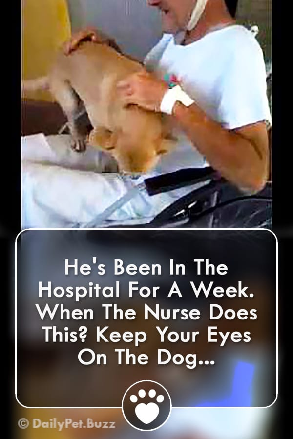 He\'s Been In The Hospital For A Week. When The Nurse Does This? Keep Your Eyes On The Dog...