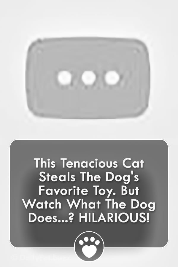 This Tenacious Cat Steals The Dog\'s Favorite Toy. But Watch What The Dog Does? HILARIOUS!