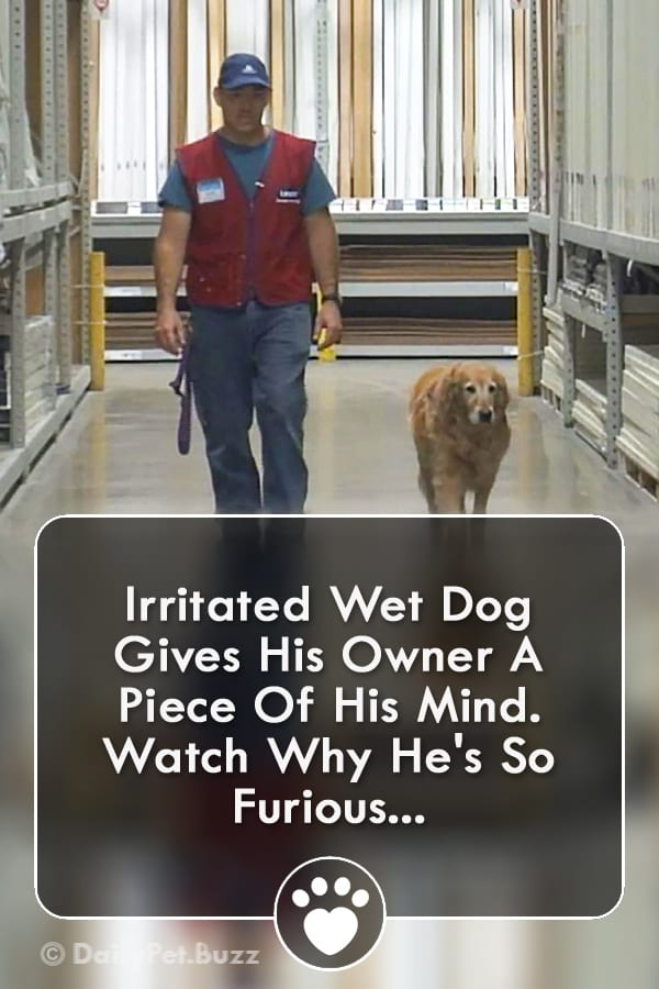 Irritated Wet Dog Gives His Owner A Piece Of His Mind. Watch Why He\'s So Furious...