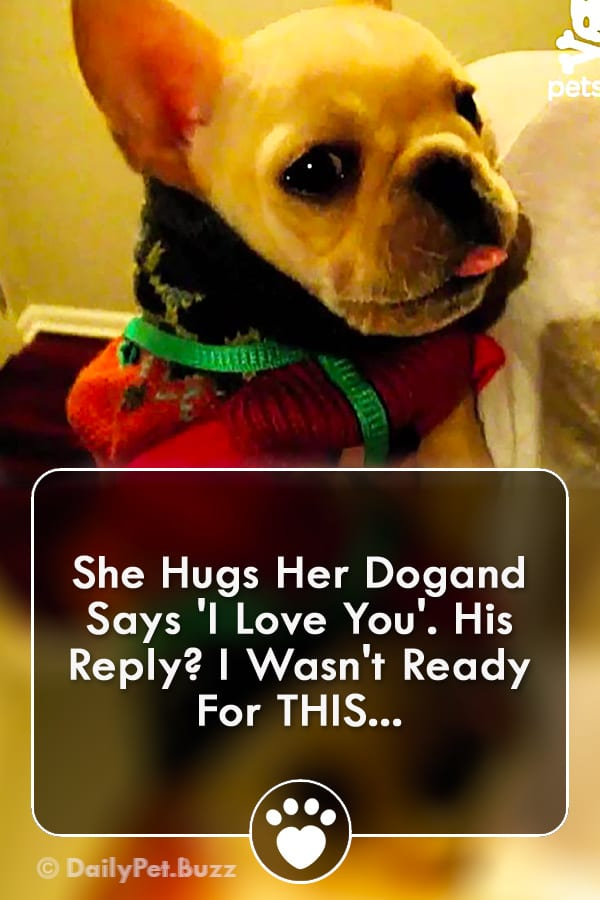 She Hugs Her Dogand Says \'I Love You\'. His Reply? I Wasn\'t Ready For THIS...