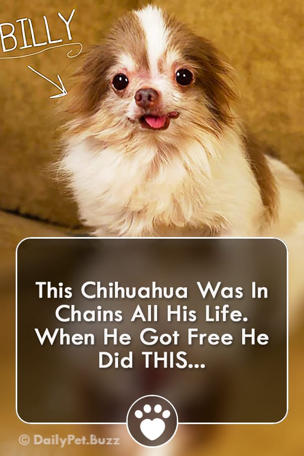 This Chihuahua Was In Chains All His Life. When He Got Free He Did THIS...