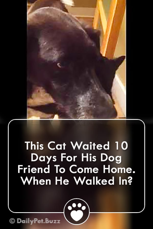 This Cat Waited 10 Days For His Dog Friend To Come Home. When He Walked In?