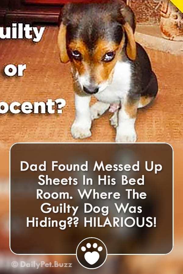Dad Found Messed Up Sheets In His Bed Room. Where The Guilty Dog Was Hiding?? HILARIOUS!