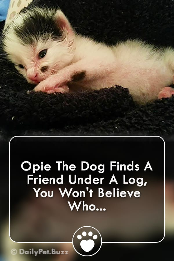 Opie The Dog Finds A Friend Under A Log, You Won\'t Believe Who...