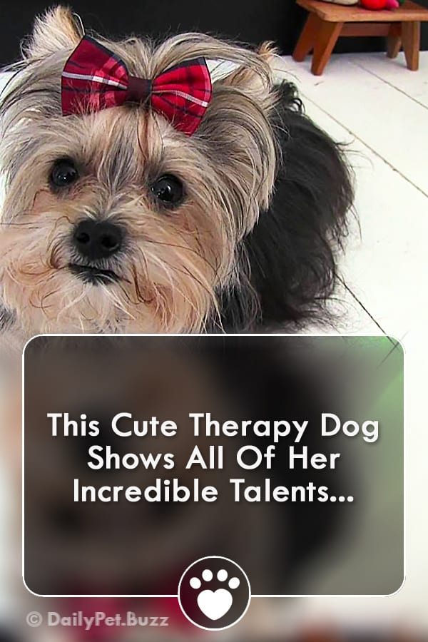 This Cute Therapy Dog Shows All Of Her Incredible Talents...