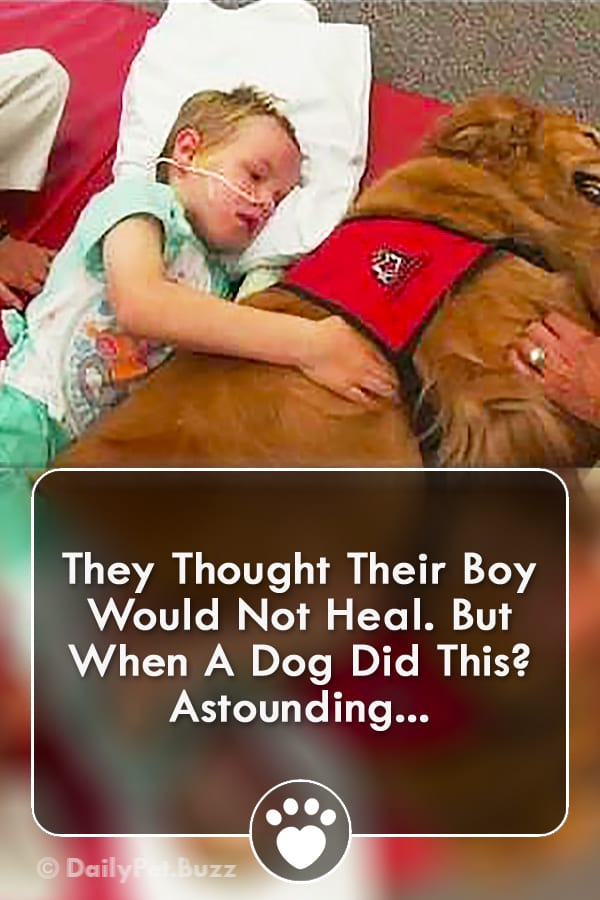 They Thought Their Boy Would Not Heal. But When A Dog Did This? Astounding...
