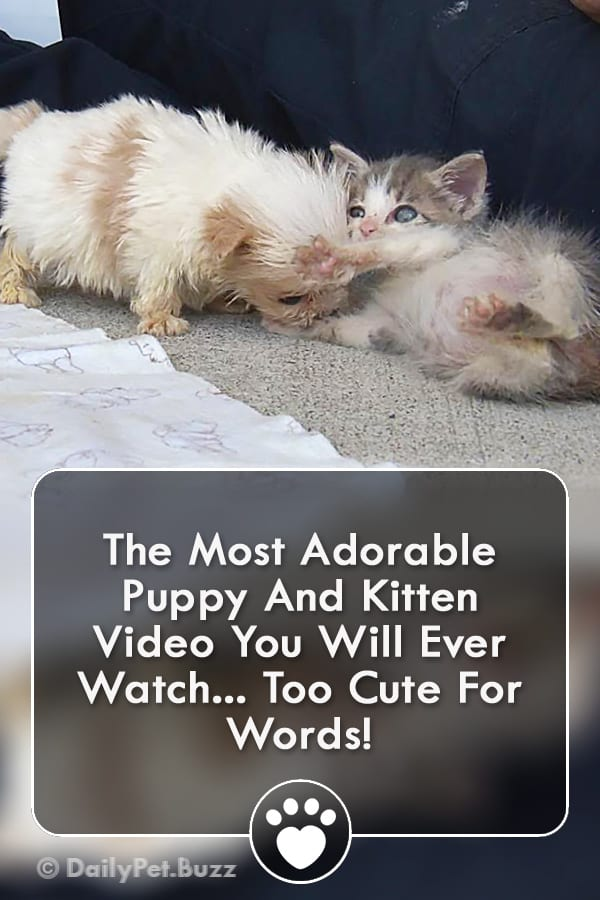 The Most Adorable Puppy And Kitten Video You Will Ever Watch... Too Cute For Words!