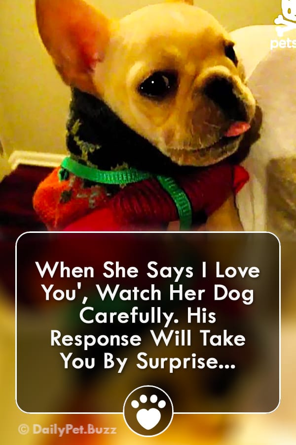 When She Says I Love You\', Watch Her Dog Carefully. His Response Will Take You By Surprise...