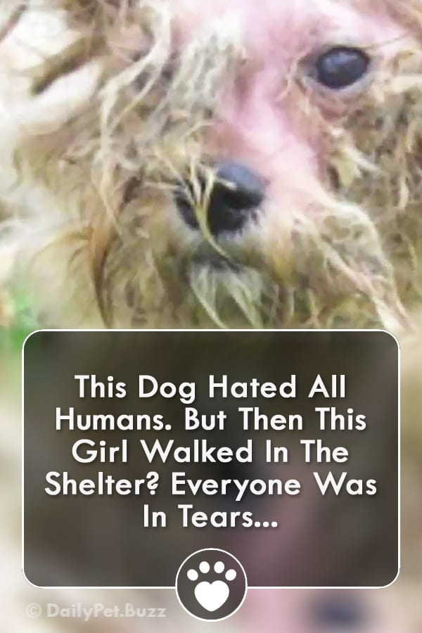 This Dog Hated All Humans. But Then This Girl Walked In The Shelter? Everyone Was In Tears...