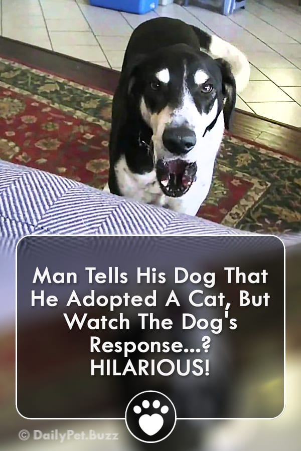 Man Tells His Dog That He Adopted A Cat, But Watch The Dog\'s Response? HILARIOUS!