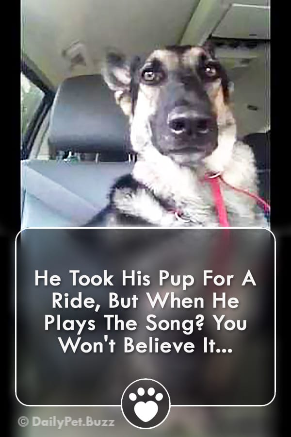 He Took His Pup For A Ride, But When He Plays The Song? You Won\'t Believe It...