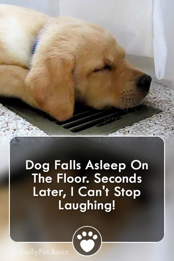 Dog Falls Asleep On The Floor. Seconds Later, I Can\'t Stop Laughing!