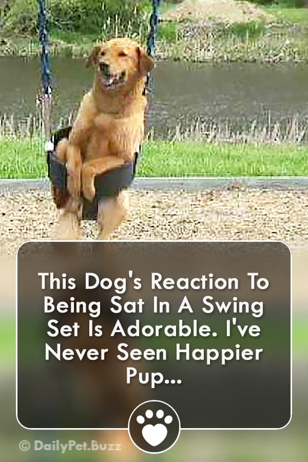 This Dog\'s Reaction To Being Sat In A Swing Set Is Adorable. I\'ve Never Seen Happier Pup...