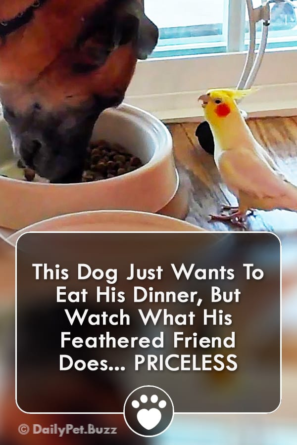 This Dog Just Wants To Eat His Dinner, But Watch What His Feathered Friend Does... PRICELESS