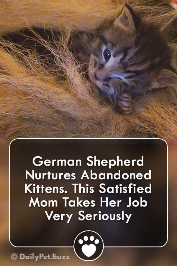 German Shepherd Nurtures Abandoned Kittens. This Satisfied Mom Takes Her Job Very Seriously