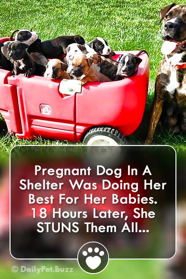 Pregnant Dog In A Shelter Was Doing Her Best For Her Babies. 18 Hours Later, She STUNS Them All...