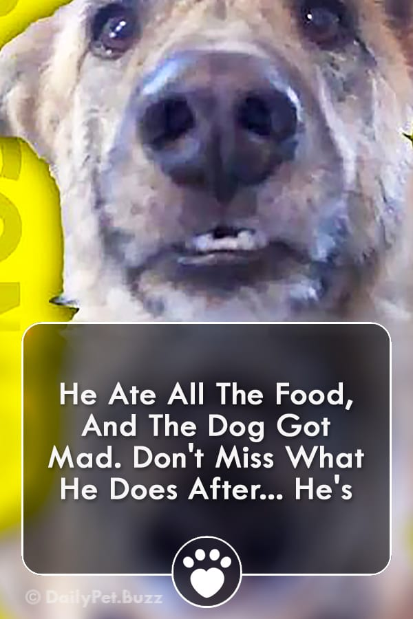 He Ate All The Food, And The Dog Got Mad. Don\'t Miss What He Does After... He\'s