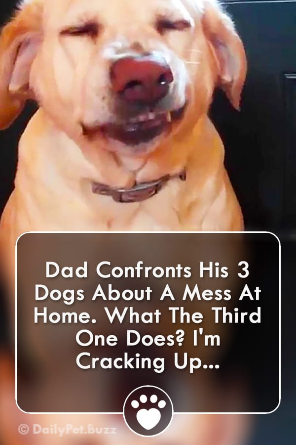 Dad Confronts His 3 Dogs About A Mess At Home. What The Third One Does? I\'m Cracking Up...
