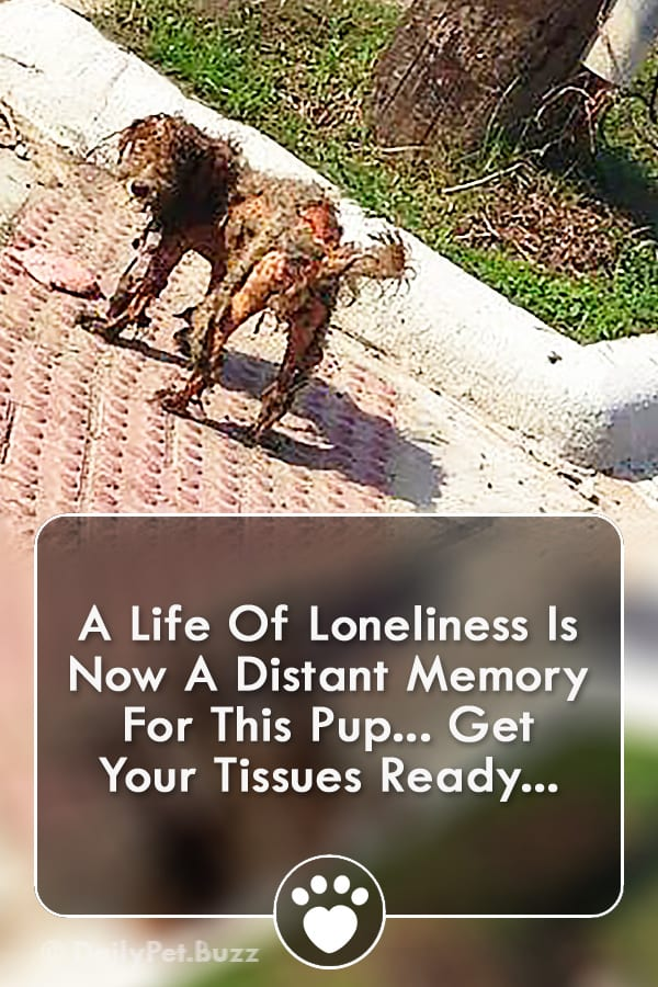 A Life Of Loneliness Is Now A Distant Memory For This Pup... Get Your Tissues Ready...
