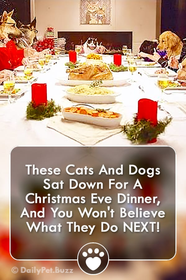 These Cats And Dogs Sat Down For A Christmas Eve Dinner, And You Won\'t Believe What They Do NEXT!