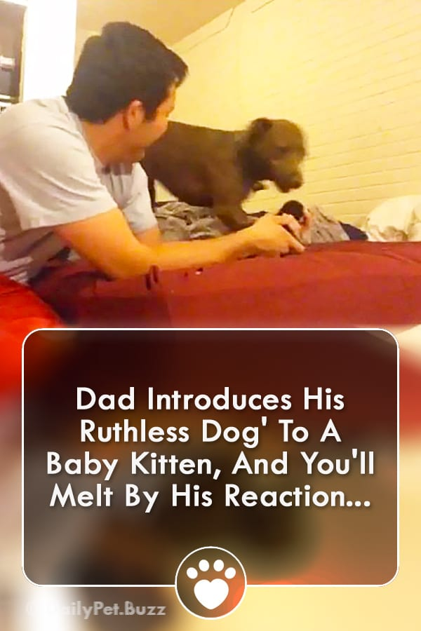 Dad Introduces His Ruthless Dog\' To A Baby Kitten, And You\'ll Melt By His Reaction...