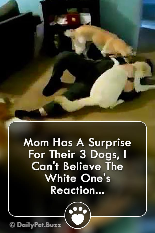 Mom Has A Surprise For Their 3 Dogs, I Can\'t Believe The White One\'s Reaction...