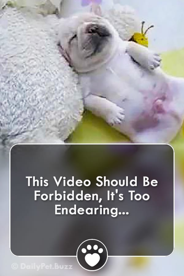 This Video Should Be Forbidden, It\'s Too Endearing...