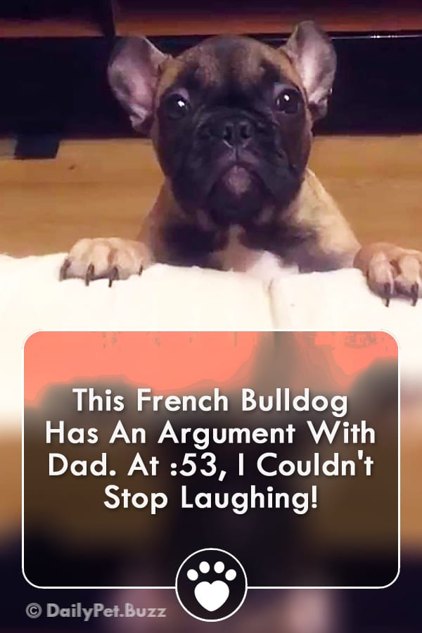 This French Bulldog Has An Argument With Dad. At :53, I Couldn\'t Stop Laughing!