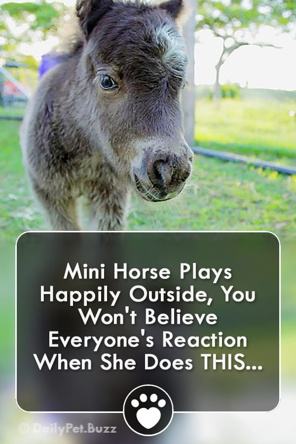 Mini Horse Plays Happily Outside, You Won\'t Believe Everyone\'s Reaction When She Does THIS...